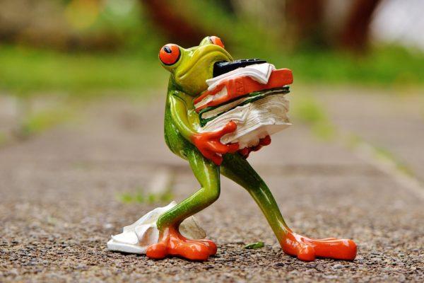 frog-1339916_960_720