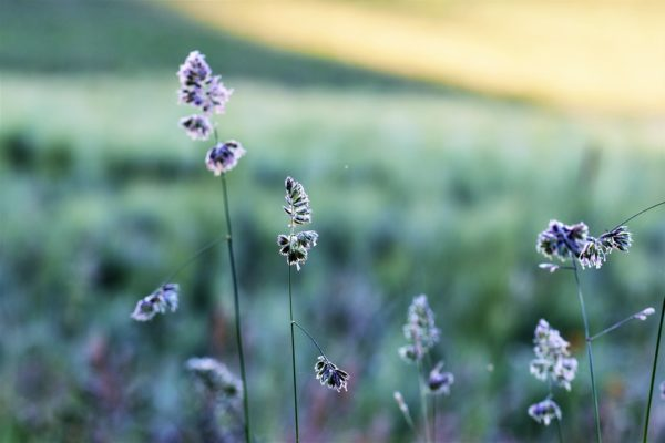 grass-2356271_960_720